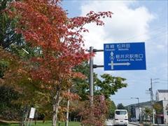軽井沢国道18号の街路樹