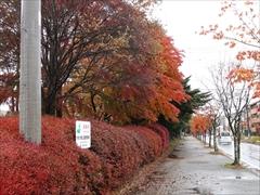 軽井沢 国道18号街路樹 29日雨