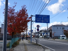 軽井沢 国道18号街路樹 30日晴れ