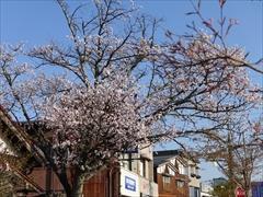 軽井沢 軽井沢駅前