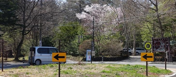 軽井沢 軽井沢の至る所で桜が満開です 恵みシャレー軽井沢 2018年4月21日
