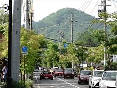 軽井沢 軽井沢 街路樹 若葉