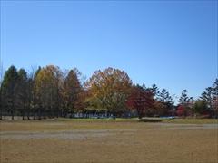 矢ヶ崎公園 紅葉
