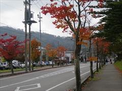 矢ケ崎公園隣接道 紅葉