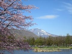 矢ヶ崎公園 桜・離山・浅間山