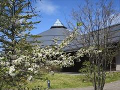 大賀ホール正面 桜
