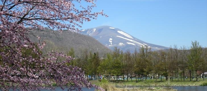 矢ヶ崎公園のヤマザクラから離山、浅間山を望む