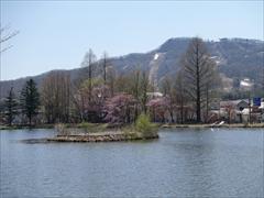 軽井沢 矢ヶ崎公園・大賀ホール 矢ヶ崎公園 桜 満開