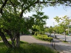 軽井沢 矢ヶ崎公園・大賀ホール 大賀通り 新緑